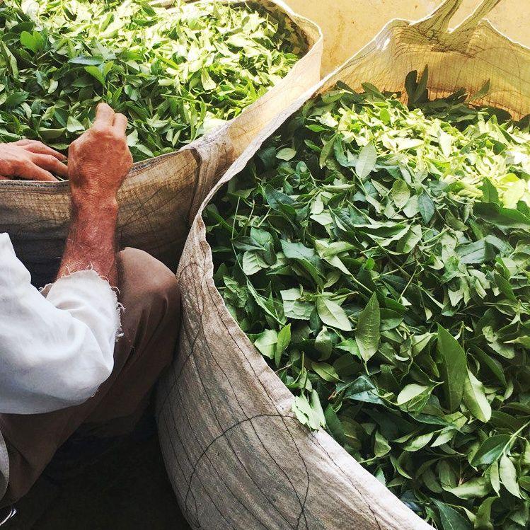خرید بهترین چای ایرانی